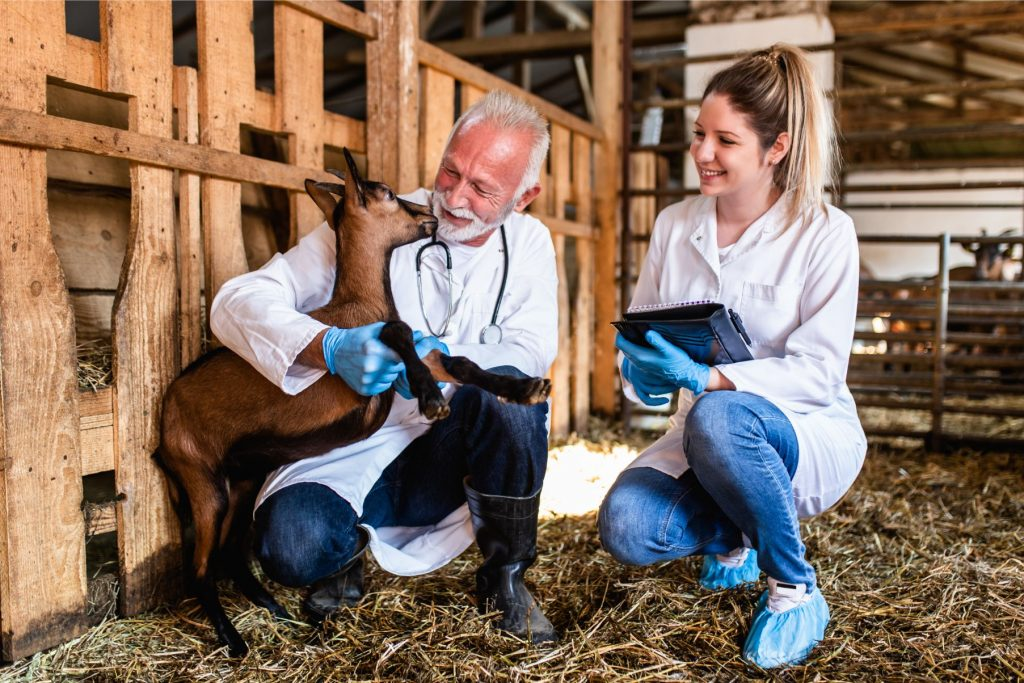 Veterinary Technicians can work in the office or in the field.